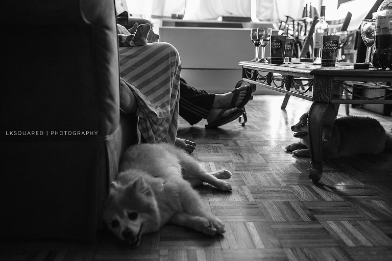 puppies on the floor with parents and baby feet