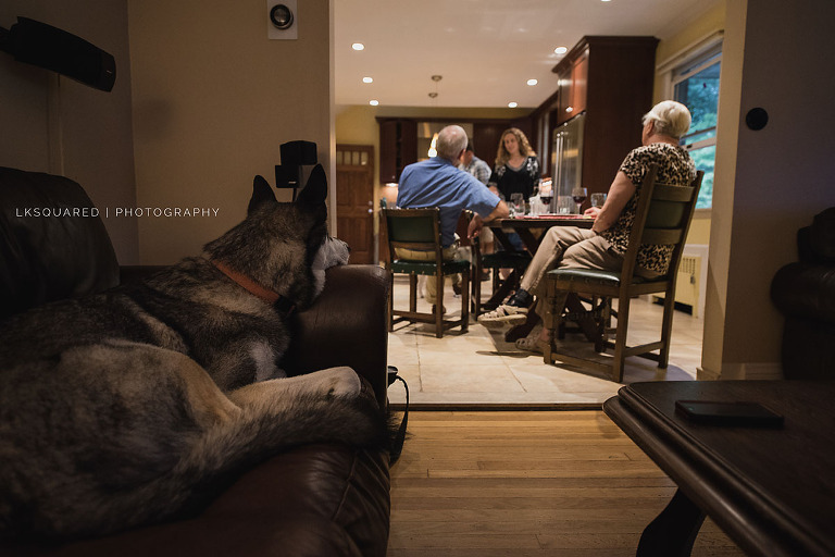 big dog watching over family eating