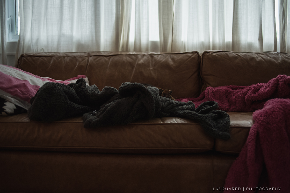 sleeping cat on the sofa in blankets