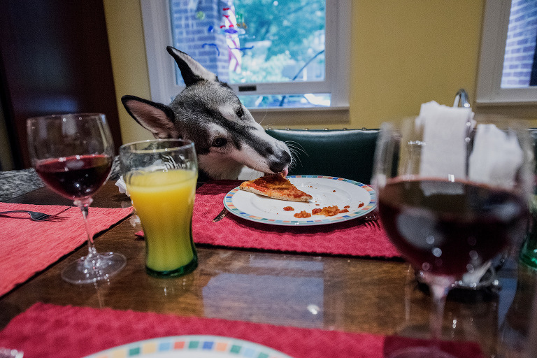 dog stealing pizza from dinner table