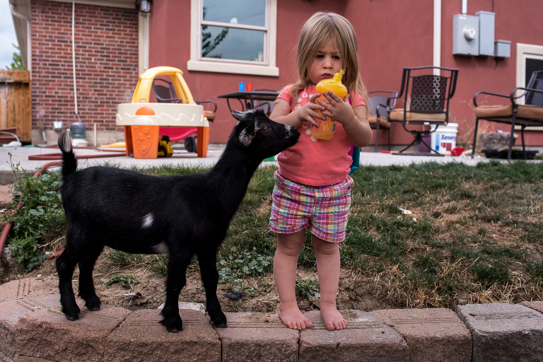 little girl and her pet goat